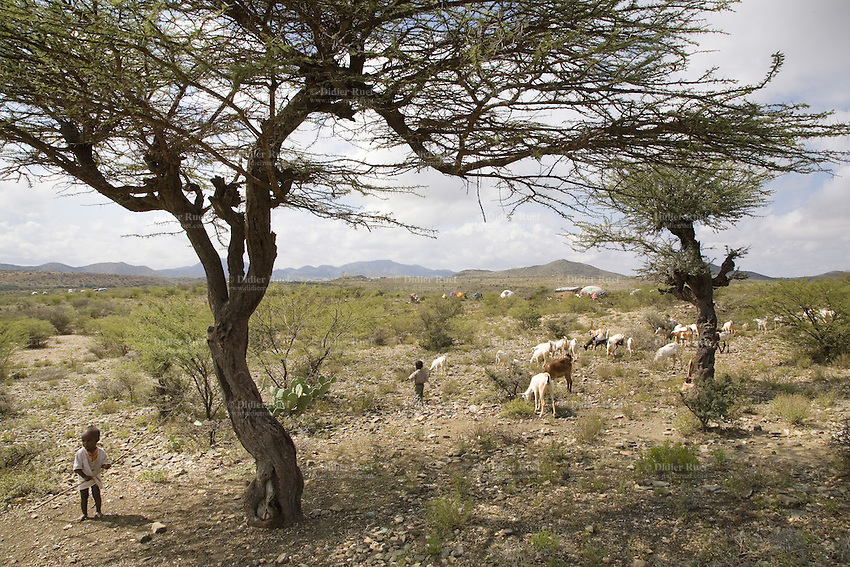 Somaliland. Awdal province. Boroma. Just outside the town, a few traditional somali huts, some black muslim boys, a few goats and trees. Somaliland is an unrecognized de facto sovereign state located in the Horn of Africa.  © 2006 Didier Ruef