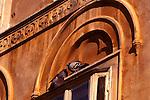 Tauben an Hausfassade, Pidgeons on housefacade, Piran, Slovenija, Piran, Slowenien, Piran (italienisch Pirano) ist eine Stadt im äußersten Südwesten Sloweniens an der Küste des Adriatischen Meeres. Mit ihrer malerischen Lage, ihrer Altstadt und venezianischen Architektur ist die Stadt an der Slowenischen Riviera eines der bekanntesten Touristenzentren Sloweniens. Piran (Italian Pirano) is a town and municipality in southwestern Slovenia on the Adriatic coast along the Gulf of Piran.