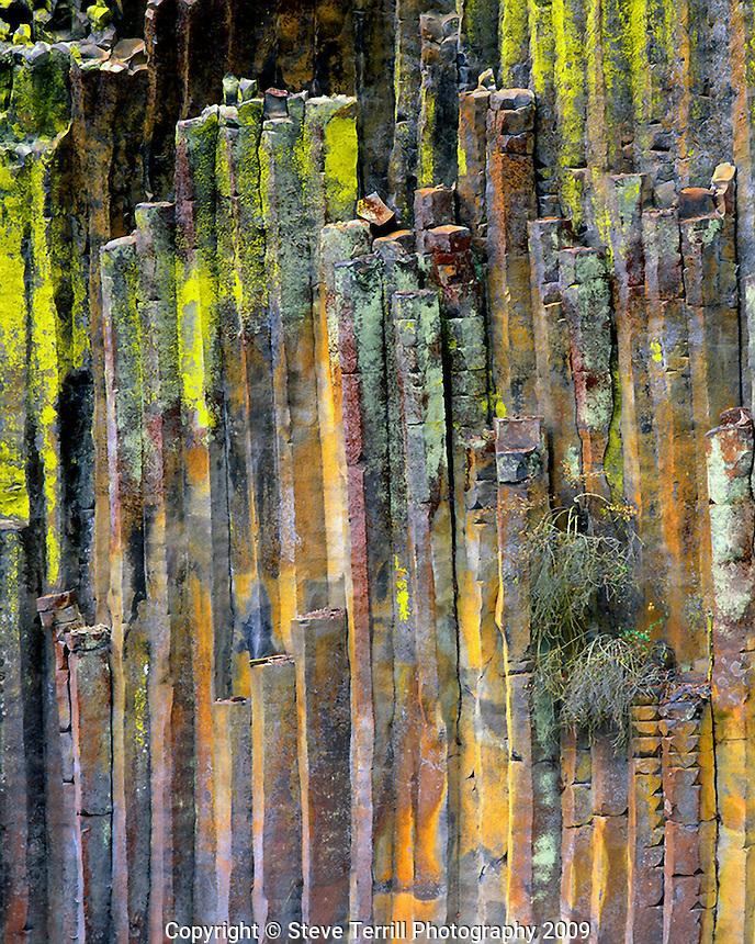 Columnar basalt covered with lichen along North Umpqua River in Douglas County Oregon