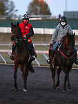 Audarya, trained by trainer James R. Fanshawe, exercises in preparation for the Breeders' Cup Filly & Mare Turf at Keeneland Racetrack in Lexington, Kentucky on November 2, 2020.