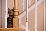 11.9.09 - Daphne the kitten