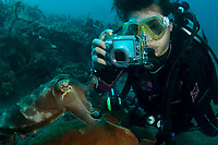 A photographer takes a photo of a cuttlefish, Sepia sp., Lembeh Strait, Manado, North Sulawesi, Indonesia, Pacific Ocean (No MR)