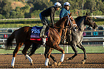 ARCADIA, CA  OCTOBER 30: Breeders' Cup Juvenile Fillies entrant K P Dreamin, trained by Jeff Mullins, exercises in preparation for the Breeders' Cup World Championships at Santa Anita Park in Arcadia, California on October 30, 2019.  (Photo by Casey Phillips/Eclipse Sportswire/CSM)
