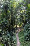 Bwindi Impenetrable National Park Trail