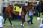 February 27, 2021 #4, Jackie's Warrior in the paddock for the Southwest Stakes (Grade III) at Oaklawn Racing Casino Resort in Hot Springs, Arkansas. Ted McClenning/Eclipse Sportswire/CSM