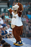 Charleston RiverDogs mascot Charlie T. RiverDog entertains fans during the game against the Augusta GreenJackets at Joseph P. Riley, Jr. Park on June 26, 2021 in Charleston, South Carolina. (Brian Westerholt/Four Seam Images)