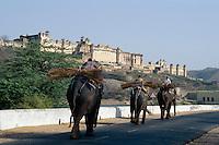 Festung Amber, Elefanten bei Jaipur (Rajasthan), Indien, UNESCO-Weltkulturerbe