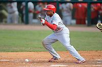St. Louis Cardinals outfielder Adron Chambers #56 bunts during a Spring Training game against the Houston Astros at Osceola County Stadium on March 1, 2013 in Kissimmee, Florida.  The game ended in a tie at 8-8.  (Mike Janes/Four Seam Images)