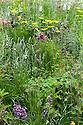The Mindfulness Garden, designed by Martin Cook, Gold medal winner, RHS Chelsea Flower Show 2013. Mixed planting includes Nepeta 'Six Hills Giant', Papaver orientale 'Patty's Plum', Geum 'Mrs Bradshaw', Geum 'Lady Stratheden', Geum 'Cooky', Geum 'Totally Tangering', Vinca minor 'Atropurpurea', Aquilegia 'Black Barlow', Aquilegia'Crimson Star', Aquilegia 'Kristall', Veronica 'Tissington White', Digitalis 'Camelot Cream', Erysimum 'Bowles's Mauve', Astrantia 'Roma', Doronicum 'Finesse', Briza media, Deschampsia caespitosa, Campanula 'Blue Planet'
