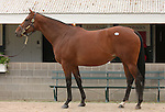 10  November  2009 Keeneland November Sale.   Hip #413 Cotton Blossom, consigned by Eaton Sales, is part of the Overbrook farm dispersal.  She is in foal to Street Cry (IRE).