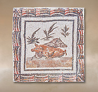 3rd century Roman mosaic panel of a boar and a sow lying down. From Thysdrus (El Jem), Tunisia.  The Bardo Museum, Tunis, Tunisia.