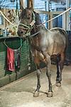 Morgan Horse Farm, Middlebury Vermont
