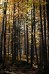 DEU, Deutschland, Bayern, Niederbayern, Naturpark Bayerischer Wald, Herbstlandschaft, Herbstwald | DEU, Germany, Bavaria, Lower-Bavaria, Nature Park Bavarian Forest, autumn landscape, autumn wood