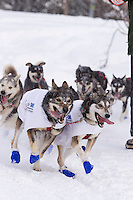 Mike Williams Jr. dogs run during  Ceremonial Start of Iditarod 2012 in Anchorage, Alaska.