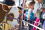 Fremont Elementary School students in Carson City, Nev., participate in the cow plop fundraiser, where they were able to meet Buttercup, a Holstein Ayrshire mix.<br /> Photo by Candice Nyando