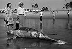 Mazatlan Mexico 1970s. Mexican couple with dead dolphin washed up on the beach, they are posing  for a photograph. Mexican state of Sinaloa 1973