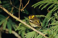 male, South Padre Island, Texas, USA, May 2005