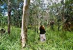 Gathering palm reeds for basket weaving, Tiwi people, Bathurst Island, Australia