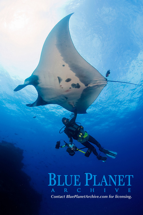 giant oceanic manta ray, Mobula birostris, formerly Manta birostris, with photographer diver in the Revillagigedo Islands, Pacific Ocean