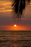 Beautiful Kona sunset with palm leaf hanging overhead