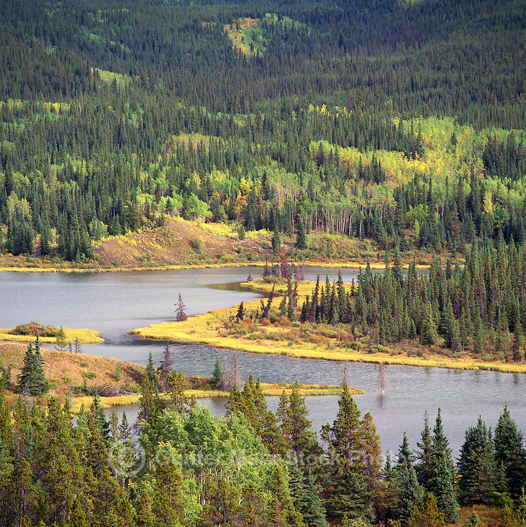 Mixed Boreal Forest and Lake, Coniferous & Deciduous Trees, Northern BC, British Columbia, Canada