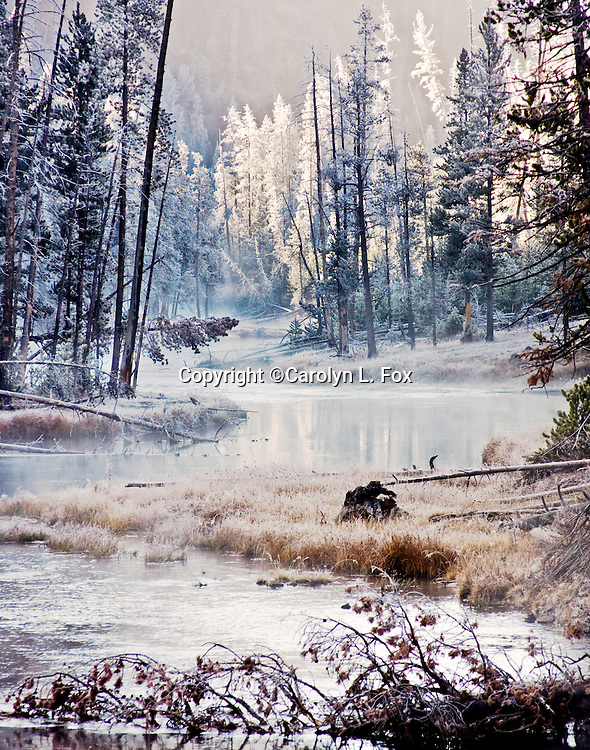 Frost can be seen on the trees in Yellowstone as the sun rises.