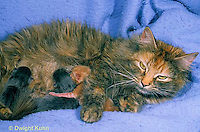 SH30-014z  Cat - mother nursing new born kittens