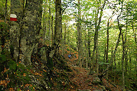 Corsica,  Woodland path near the Col de Verde, walker on part of the GR20..