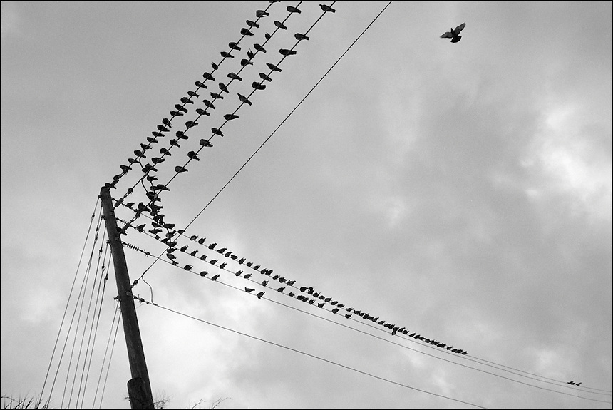 "Pigeons<br /> From ""Miami in Black and White"" series. North Miami Beach, FL, 2009"