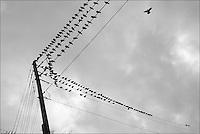 """Pigeons<br /> From """"Miami in Black and White"""" series. North Miami Beach, FL, 2009"""