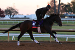 Civil Union, trained by trainer Claude R. McGaughey III, exercises in preparation for the Breeders' Cup Filly & Mare Turf at Keeneland Racetrack in Lexington, Kentucky on November 5, 2020.