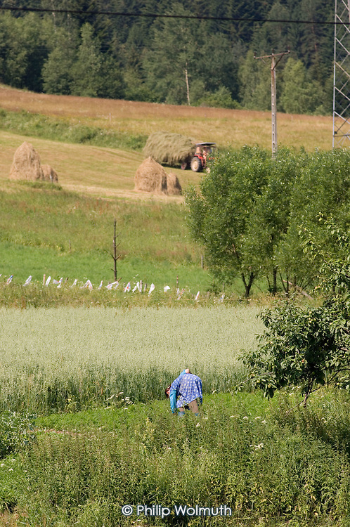 An elderly woman in peasant dress on her farm in south-eastern Poland