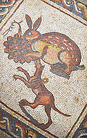 Hunting scene with a hare and dog from the 3rd century Roman mosaic villa floor from Lod, near Tel Aviv, Israel. The Roman floor mosaic of Lod is the largest and best preserved mosaic floor from the levant region along the eastern Mediterranean coast. It is unclear whether the owners were Jewish, Christian or pagan but either way they would have been wealthy to own such a magnificent floor. The Shelby White and Leon Levy Lod Mosaic Centre, Lod, Israel.Israel.
