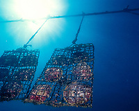 pearl shell cages hold golden pearl shells, Pinctada maxima, at pearl farm, Kimberley, Weset Australia, Indian Ocean