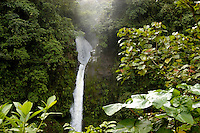 The La Paz Waterfall in the Braulio Carillo National Park, Costa Rica