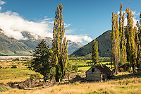 Views towards Humboldt Mountains and into Dart Valley through poplars with old shed near Glenorchy, Mt. Aspiring National Park, Central Otago, New Zealand