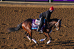 November 3, 2020: Dreamer's Disease, trained by trainer Robertino Diodoro, exercises in preparation for the Breeders' Cup Juvenile at Keeneland Racetrack in Lexington, Kentucky on November 3, 2020. John Voorhees/Eclipse Sportswire/Breeders Cup/CSM