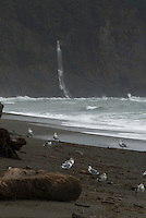 Third Beach Waterfall,  Third Beach, Olympic National Park, Washington, US