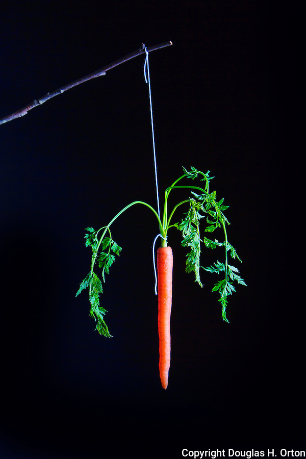 Carrat on a Stick. Fine Art image.