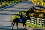 October 31, 2020: Calibrate, trained by trainer Steven M. Asmussen, exercises in preparation for the Breeders' Cup Juvenile at Keeneland Racetrack in Lexington, Kentucky on October 31, 2020. Scott Serio/Eclipse Sportswire/Breeders Cup/CSM