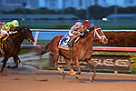 HALLANDALE BEACH, FL - FEBRUARY 06:     Mshawish #3 with John Velazquez on board wins the 61st running of the Donn Handicap G1 on Donn Handicap Day  at Gulfstream Park on February 06, 2016 in Hallandale Beach, Florida. (Photo by Liz Lamont)