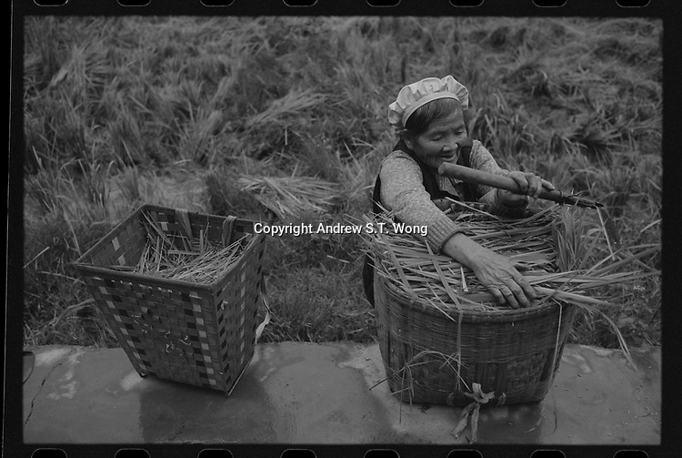 An octogenarian villagers collect haystacks att Xingyi, Guizhou Province, 2018.