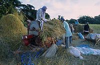 PHILIPPINES Palawan, farmer thresh paddy rice with threshing machine / Philippinen Palawan, Bauern dreschen Reis mit Dreschmaschine