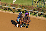 November 3, 2020: Ebeko, trained by trainer Peter Miller, exercises in preparation for the Breeders' Cup Juvenile Turf at Keeneland Racetrack in Lexington, Kentucky on November 3, 2020. John Voorhees/Eclipse Sportswire/Breeders Cup/CSM