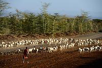 KENYA, Marsabit, drought, cattle herder with goats searching vor water and fodder / KENIA, Marsabit, Tierhaltung, Hirtenjunge mit Ziegenherde auf Suche nach Wasser und Futter