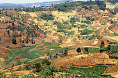 Mount Tessa, Burundi. Patchwork agriculture with trees on a slope.