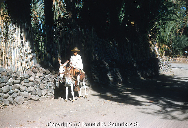 YOUNG MAN RIDES ON DONKEY