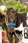 Derby Gold walking into the paddock for the Real Good Deal Stakes at Del Mar Race Course in Del Mar, California on August 3, 2012.