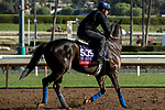 ARCADIA, CA  OCTOBER 30: Breeders' Cup Sprint entrant Imperial Hint, trained by Luis Carvajal Jr.,  exercises in preparation for the Breeders' Cup World Championships at Santa Anita Park in Arcadia, California on October 30, 2019.  (Photo by Casey Phillips/Eclipse Sportswire/CSM)