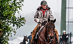 January 23, 2020: An outrider heads to the track during preparations for the Pegasus World Cup Invitational at Gulfstream Park Race Track in Hallandale Beach, Florida. Scott Serio/Eclipse Sportswire/CSM